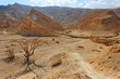 Desert landscape with dry acacia trees near Eilat, Israel