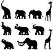 Elephants, mammoth, giraffe