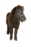 Pony auf einem weißen Hintergrund