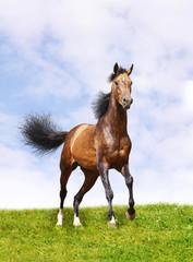 horse on grass