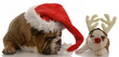 english bulldog dressed as santa and rudolph puppy