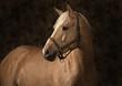Fototapeten,pferd,pferd,schwarz,portrait