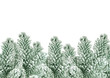 fir tree branch with artificial snow