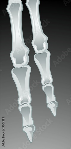 Illustration of human finger bone