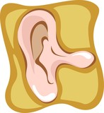 Illustration of human outer ear