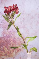 Flower in a vase background