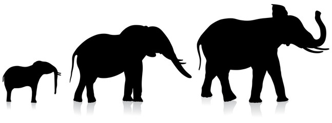 adult and infant elephants on white background