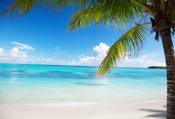 ocean and coconut palms