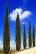 Zypressen, Weg, Himmel, Wolke, Toskana, Italien