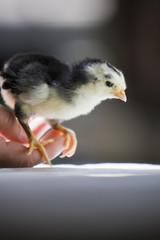 Adult Holding Baby Bird