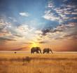 Elephant - 19027898