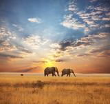 Fototapeta zwierzęta - obszar - Dziki Ssak