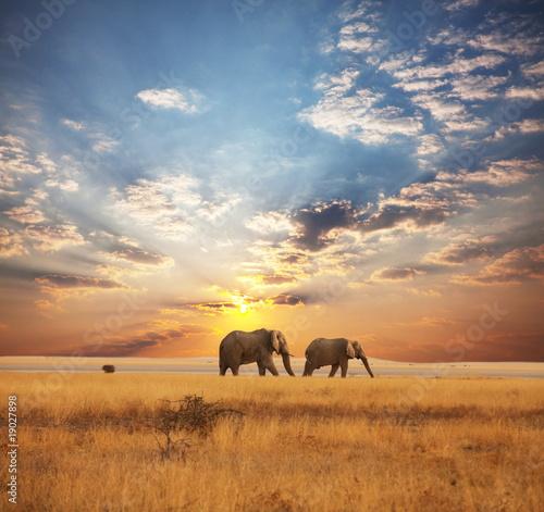 Foto op Canvas Olifant Elephant