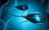 Flagella bacterium poster