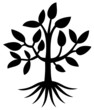 Arbre - Tree - ( Silhouette - Dessin - Illustration - Vecteur )