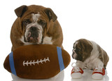 teaching puppy how to play football poster