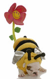 dog dressed as a bee with behind up to pollinate a flower poster