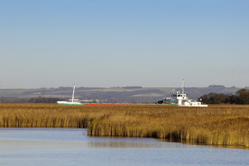 freighter sailing past the reeds of a nature reserve