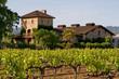 Leinwanddruck Bild - Napa Valley vineyard at sunset