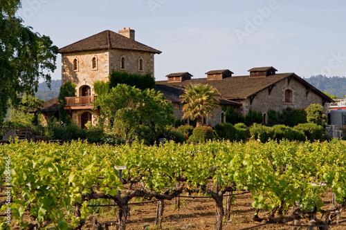 Leinwandbild Motiv Napa Valley vineyard at sunset