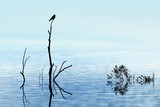 reflet oiseau nature branche calme repos tranquille silence lac poster