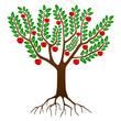 Pommier en été - Summer Apple Tree ( Arbre - Saisons - Vecteur)
