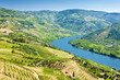 vineyars in Douro Valley, Portugal - 19088643