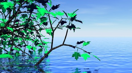 Maple tree and beautiful water