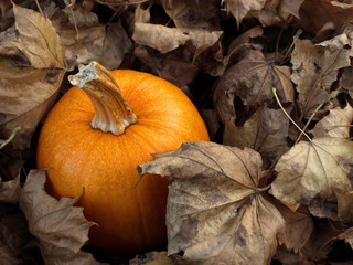 Pumpkin in leaves