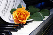 rose over  musical note