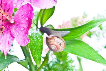 snail on fresh leaf