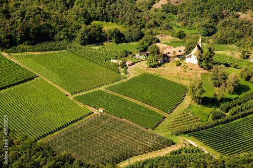 Trentino: panormamica campi di mele e vitigni