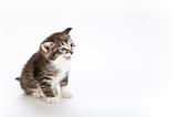 kitten mewing poster