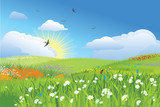 Fototapety Colorfull meadow / flower and grass / vector