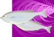 Illustration of two fishes in a violet colour background
