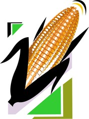 Illustration of a maize isolated