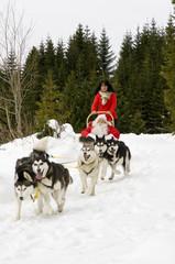 Hundeschlitten mit Santa Claus