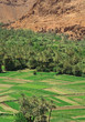 village and palm grove among Moroccan hills