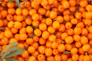 Seabuckthorn background