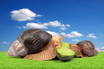 Two brown snails