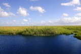 Blue sky in Florida Everglades wetlands green plants poster
