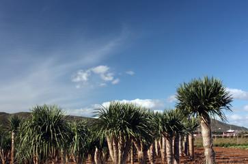 cactus en el cielo