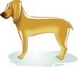 Illustration of brown colour dog