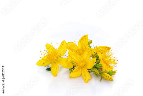 Johanniskraut feigestellt - St Johns wort isolated 01