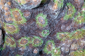 detail of a star coral