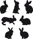 Fototapety Rabbit vector