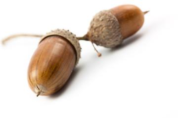 acorn (Eichel)