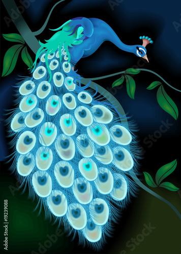 Fototapeta Peacock on the tree