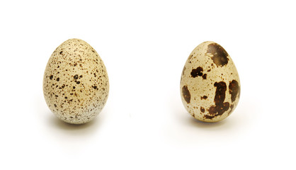 Two quail eggs