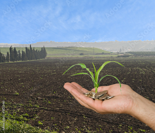 Farmer presenting corn shoot as a gift of agriculture - 19255461